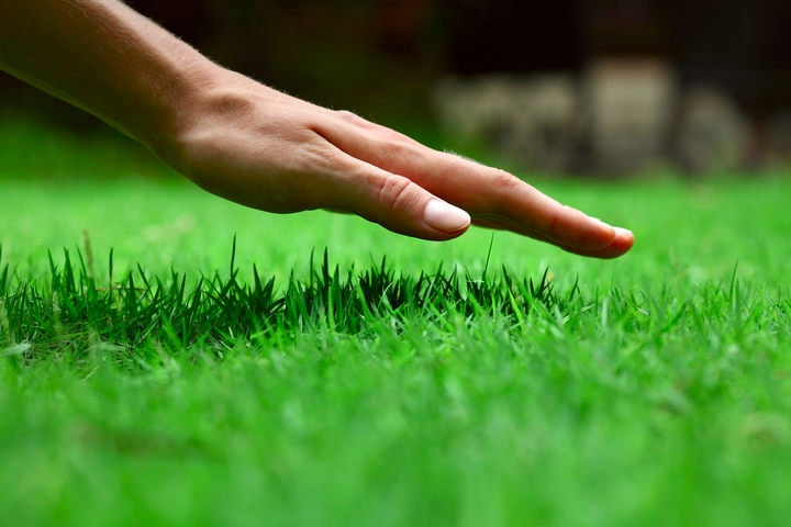 8 Ideas on How to Take Care of Your Lawn
